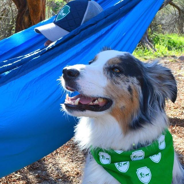 goose the aussie might be a little jealous that mom is in the hammock  goose the aussie might be a little jealous that mom is in the      rh   pinterest