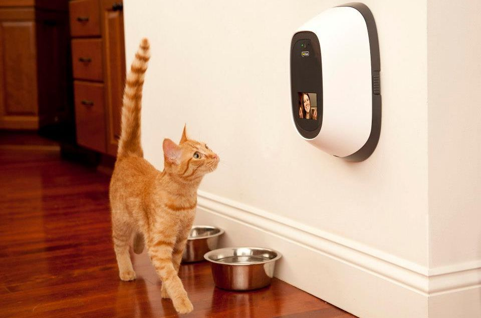 11 Of The Best Tech Products Every Pet Lover Needs With Images Pet Camera Pet Cam Indoor Cat