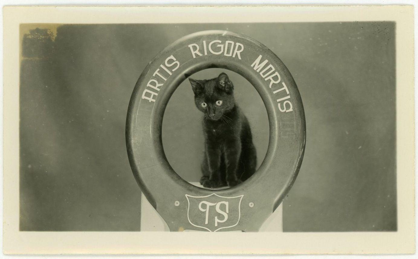 Kitty Cat Odd Pet Portrait Black Animal Rigor Mortis Letter