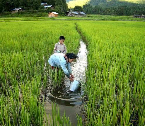 apatani farming