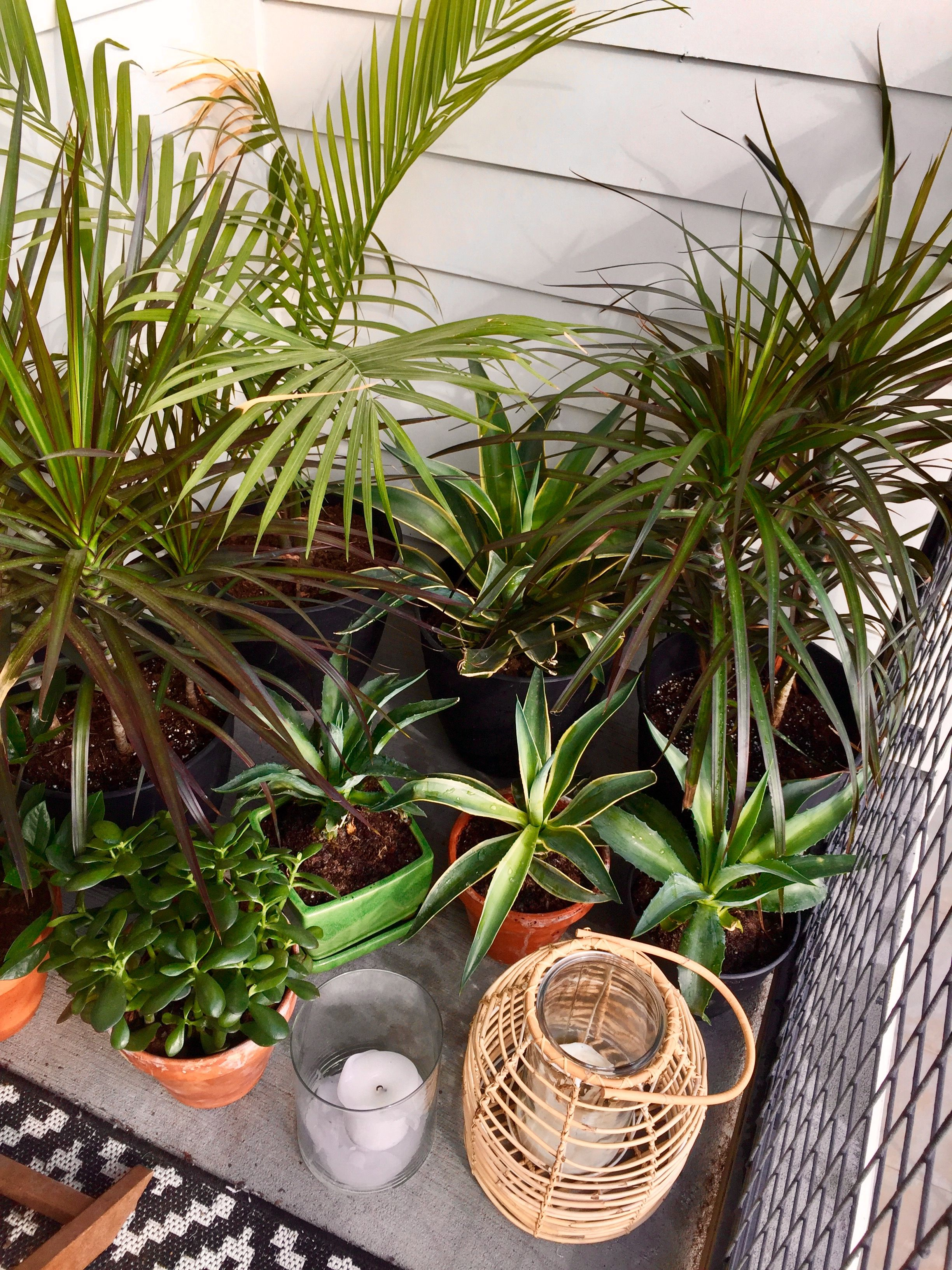 tropical plants, lanterns, candles, balcony, balcony decor and