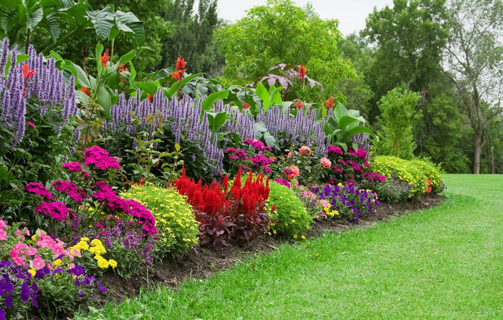 10 Tips For Growing A Stunning Organic Flower Garden On A Budget