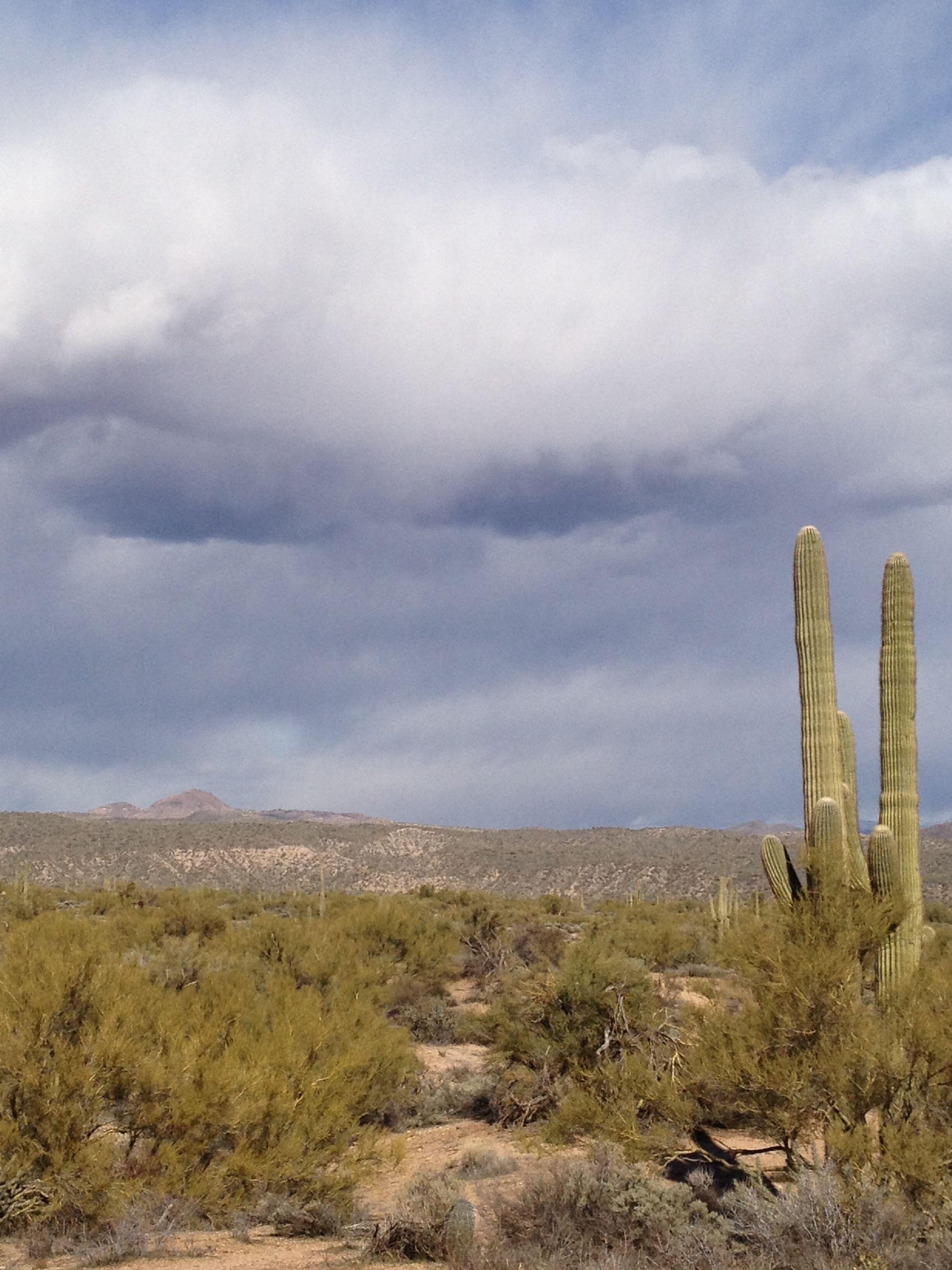 Scottsdale Desert