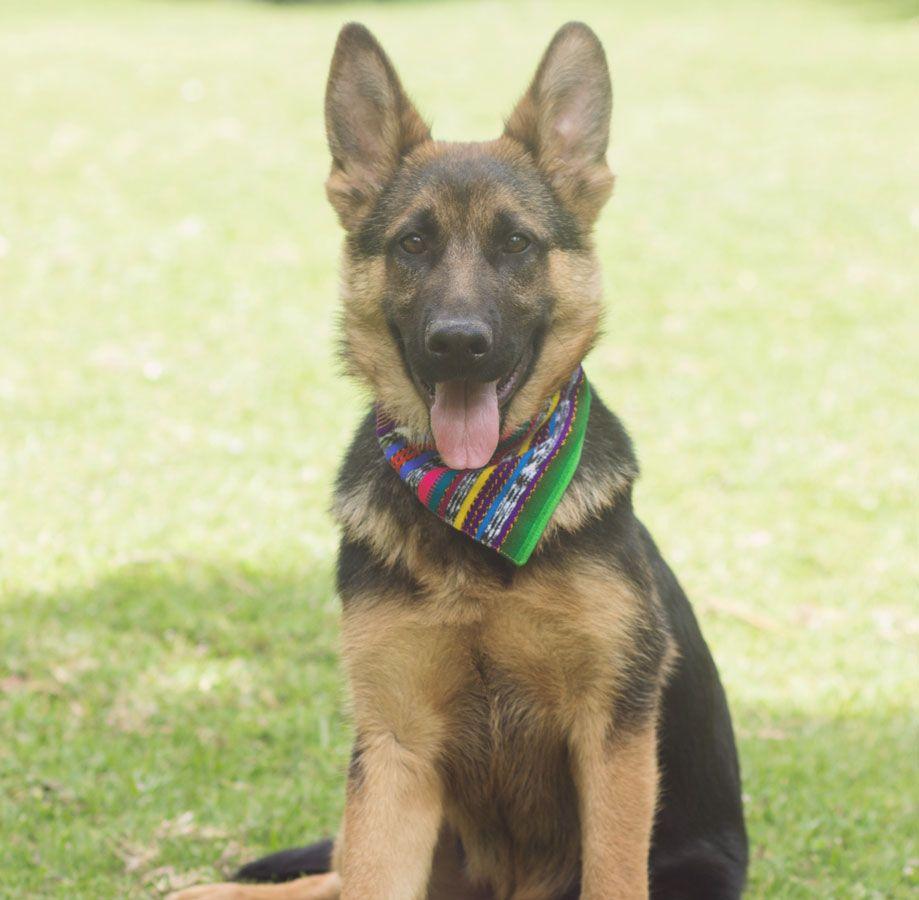 My Boho Dog Bandana Dog Bandana Dog Collar Bandana Dogs