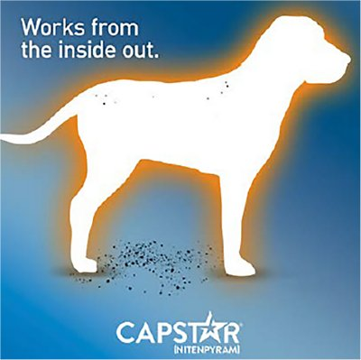 Capstar Flea Tablets For Dogs 26 125 Lbs 6 Count Chewy Com Flea Control For Dogs Animal Medicine Pet Medications