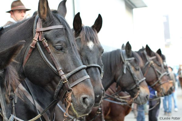 The Near Side: The Horses of Fieracavalli