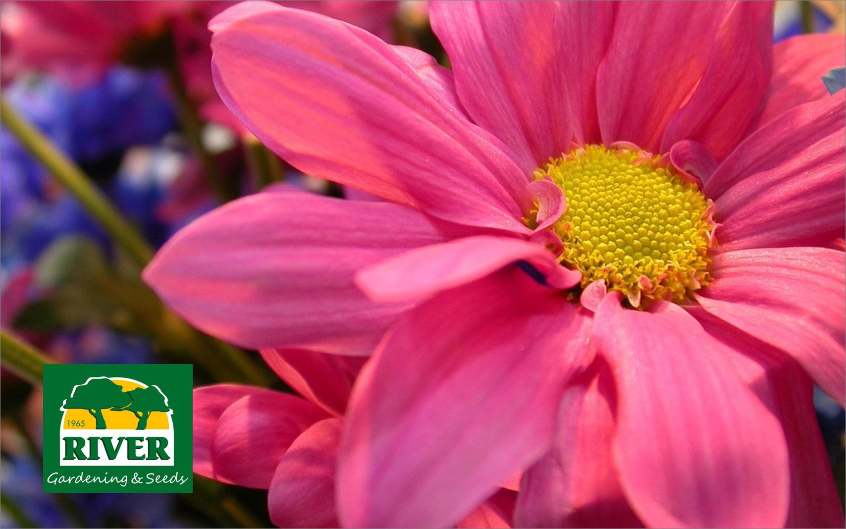 Variedades de Primavera, que llenarán de luz y aromas tu jardín.