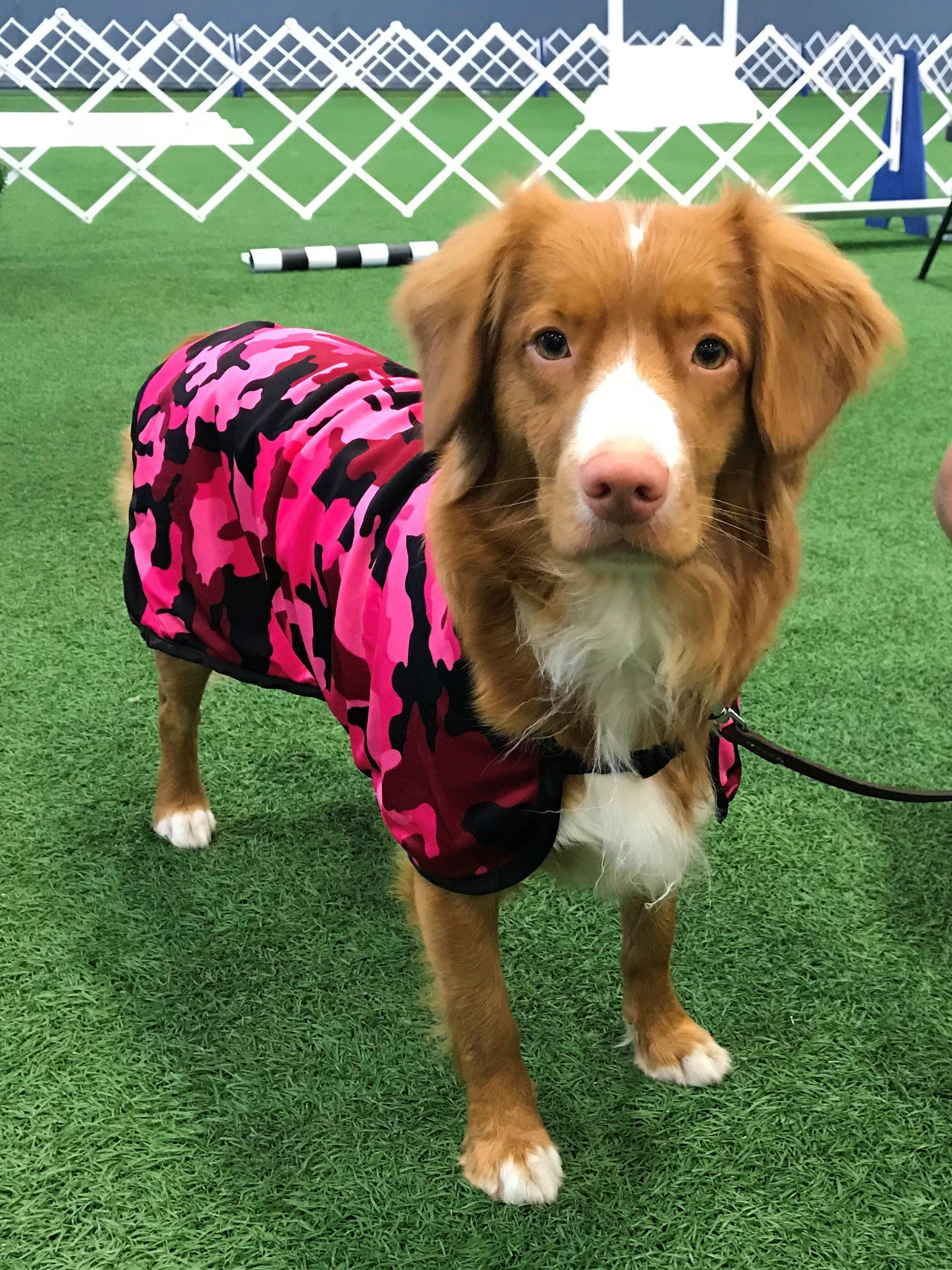 Pin By Kate S Closet On Fashionable Pups Dog Cooling Coat