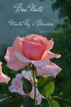 Imagens De Boa Noite Jesus Com Frases My Garden Dreams Rose