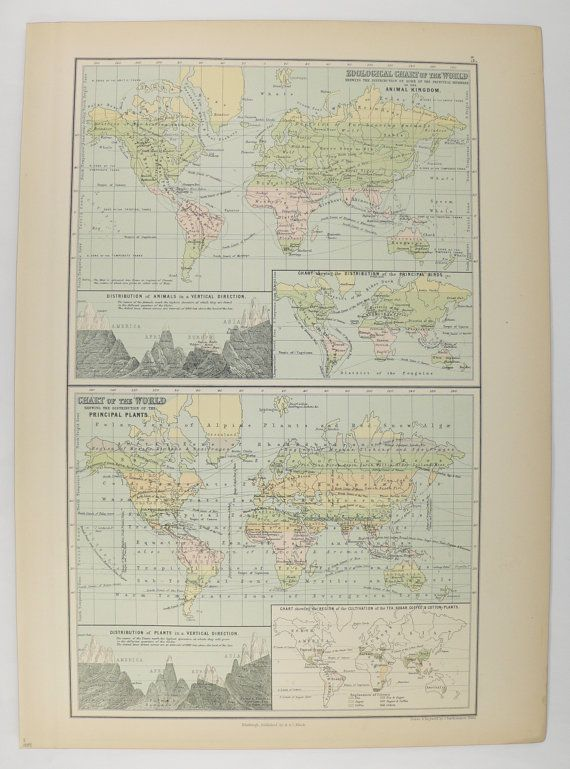 Antique 1884 a c black world map of the world botany plants map antique 1884 a c black world map of the world botany plants map zoology animals map flora and fauna unique gift for student gumiabroncs Image collections