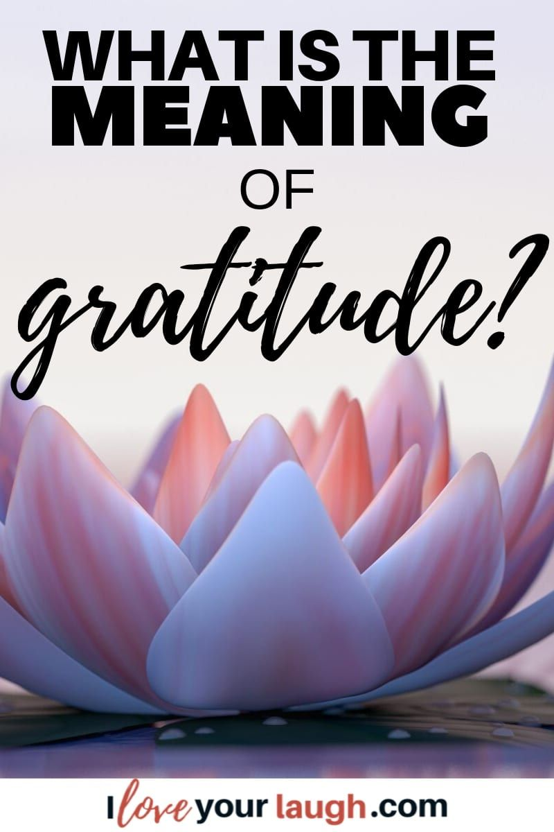 What Is The Meaning of Gratitude? The Best Minds Speak Out | Expressing  gratitude, Gratitude, Gratitude quotes