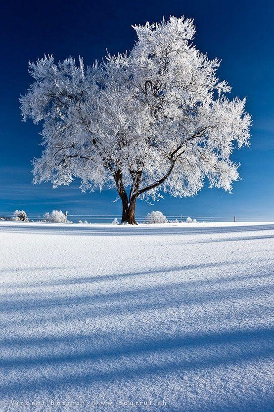 Most Amazing Photography Photo Picture Image Beautiful Amazing Nature Winter Snow Tree Landsca Winter Scenery Winter Photography Winter Landscape