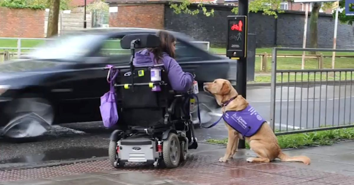 This Disabled Woman Needs Help Watch The Dog S Reaction I M