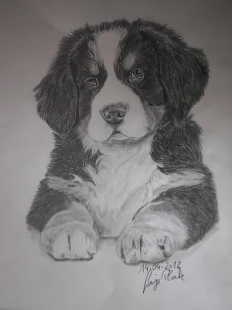 Pin By Buttas On Cutest Drawlings Cute Drawlings Animals Dogs