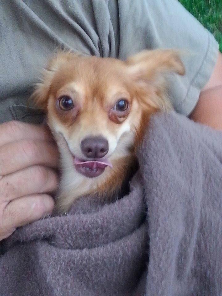 Found dog bethlehem pa lehigh county contact