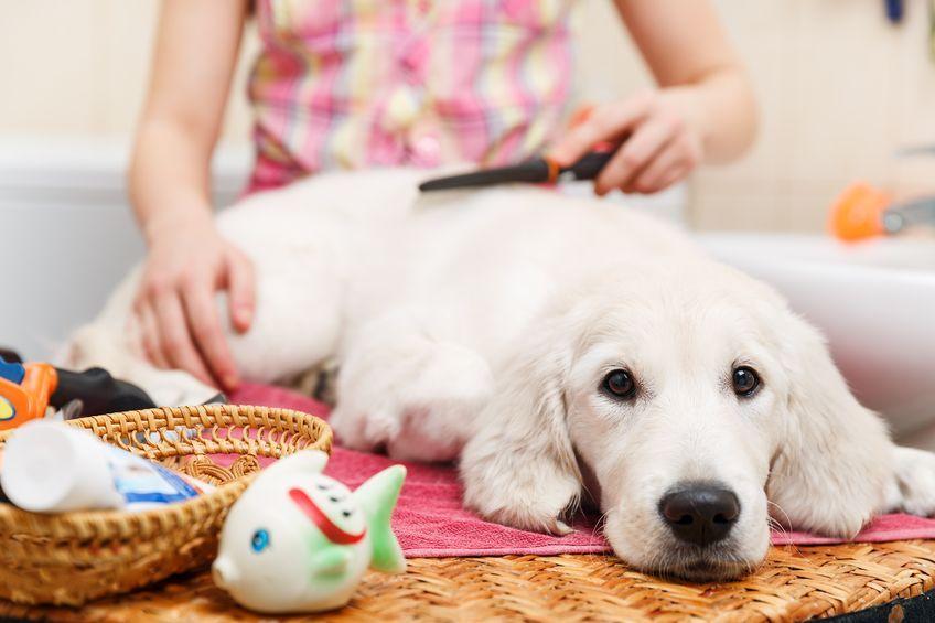 So Halten Sie Ihren Hund In Diesem Fruhling Sicher Und Gesund