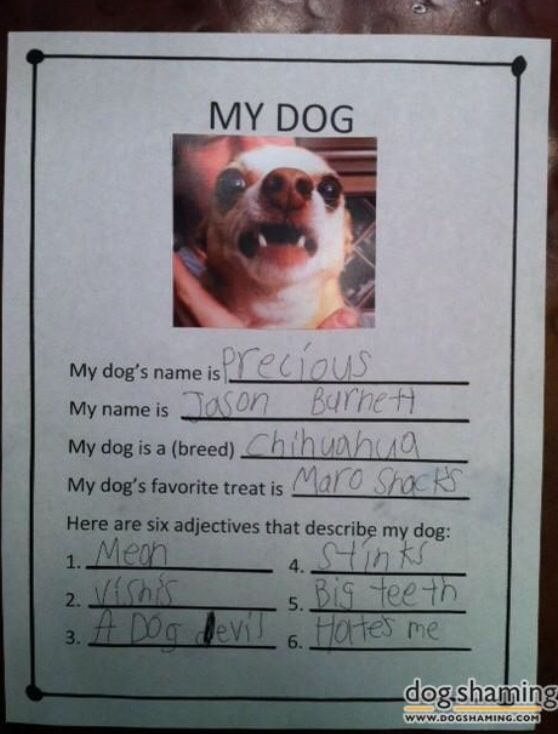 Dog Eats His Poop Instead Of His Food
