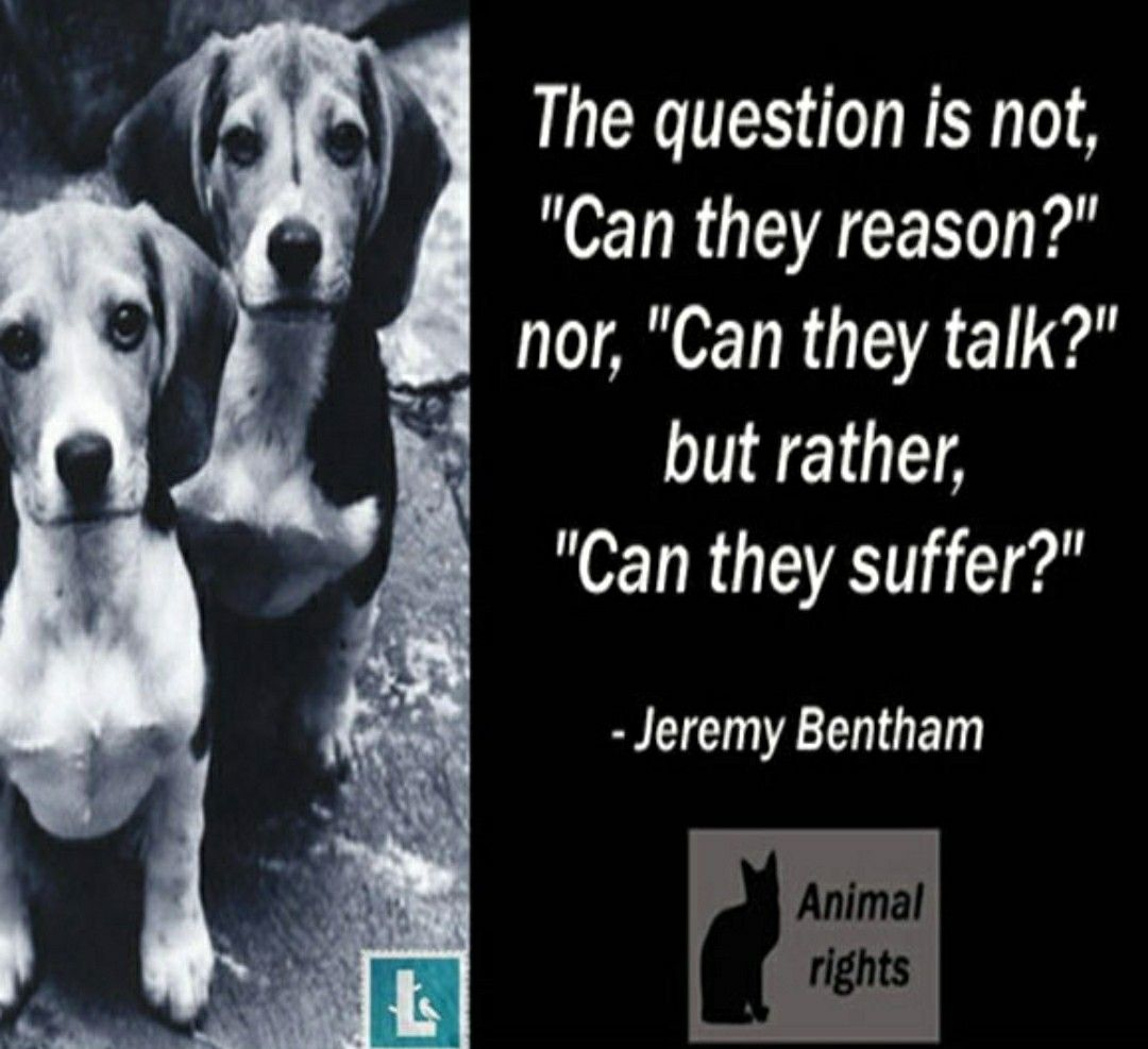 Pin By Mindy Zimmerman On Furbabies Stop Animal Cruelty Animals Animal Abuse