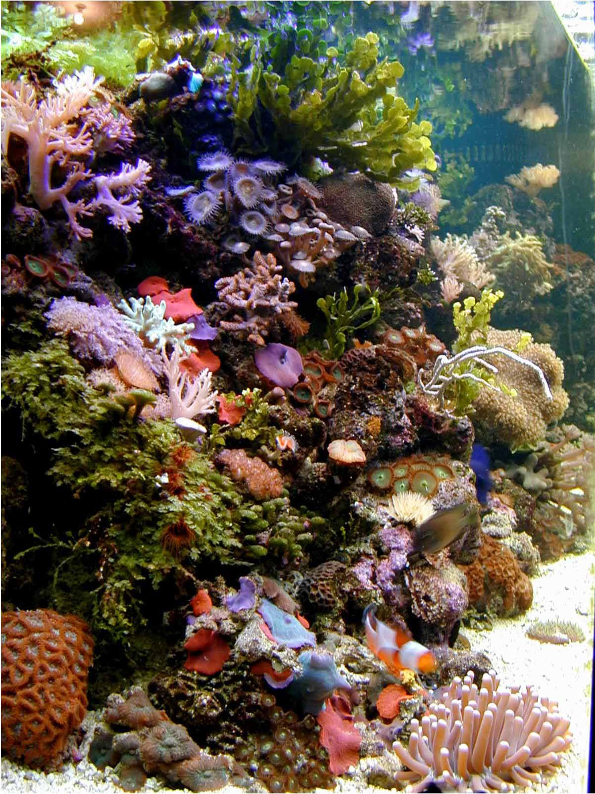 Saltwater Aquariums aquarium Reef Aquariums