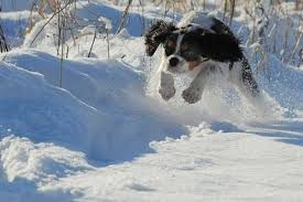 what fun running in the snow Ax