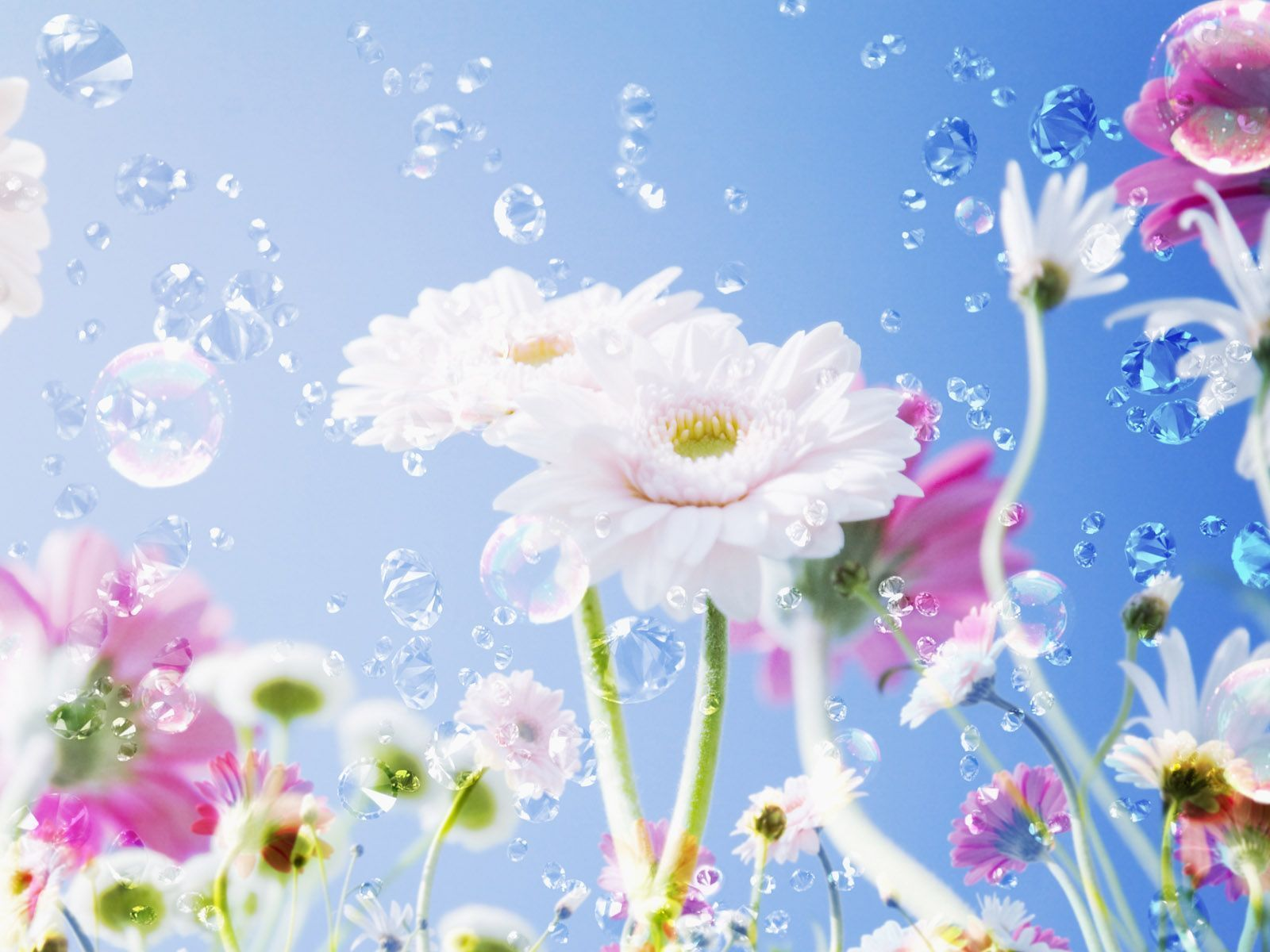 Hd wallpaper beautiful - Beautiful And Attractive Flowers Wallpapers For Desktopphotography