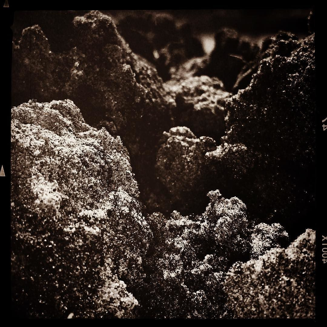 Ant Pile #ant #pile #soil #dirt #blackandwhite #clearwater #florida #floridalife #floridaliving #tampabay #iphoneonly