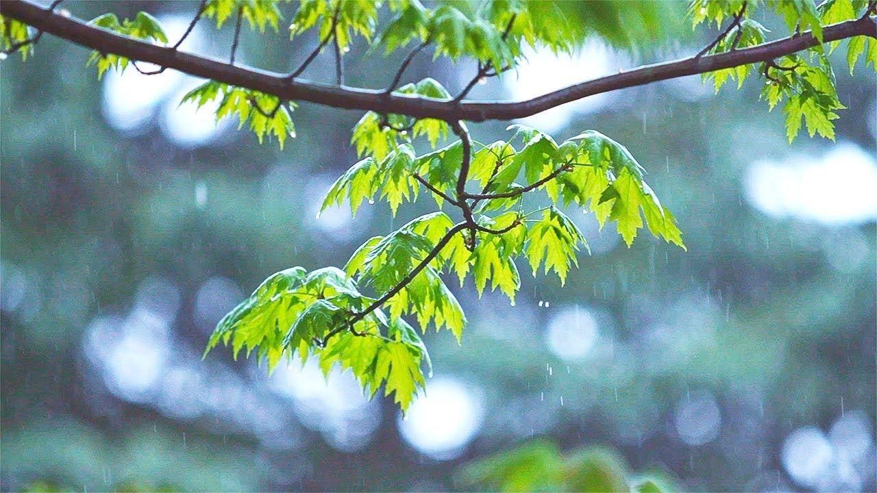 Relaxing Music & Soft Rain Sounds Beautiful Piano, Sleep