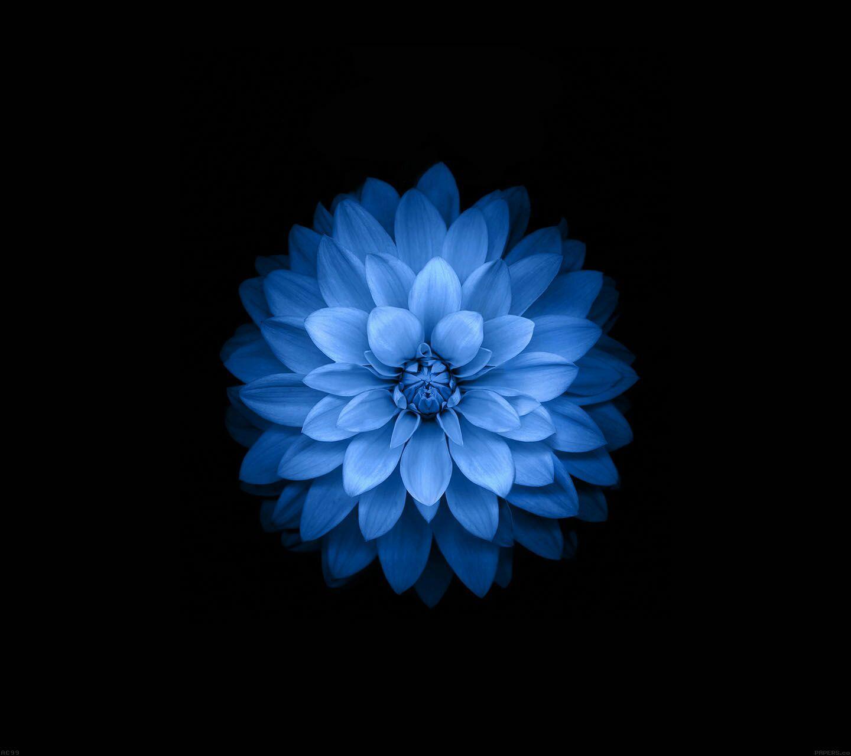 Duvar Kagitlari Flower Iphone Wallpaper Blue Flower Wallpaper Flower Wallpaper