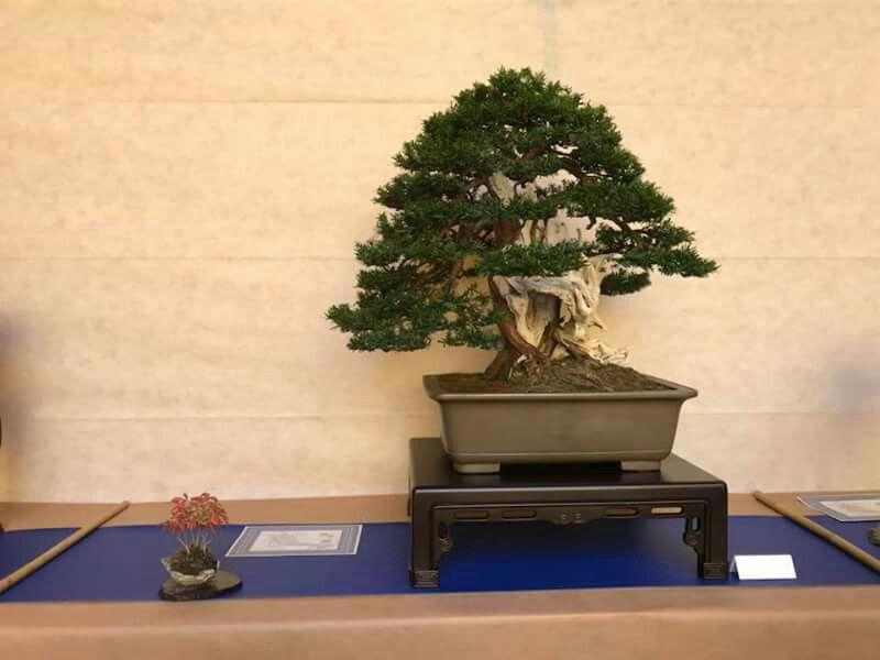 Xiii Edizione Del Premio Per Autori So Saku Bonsai Award