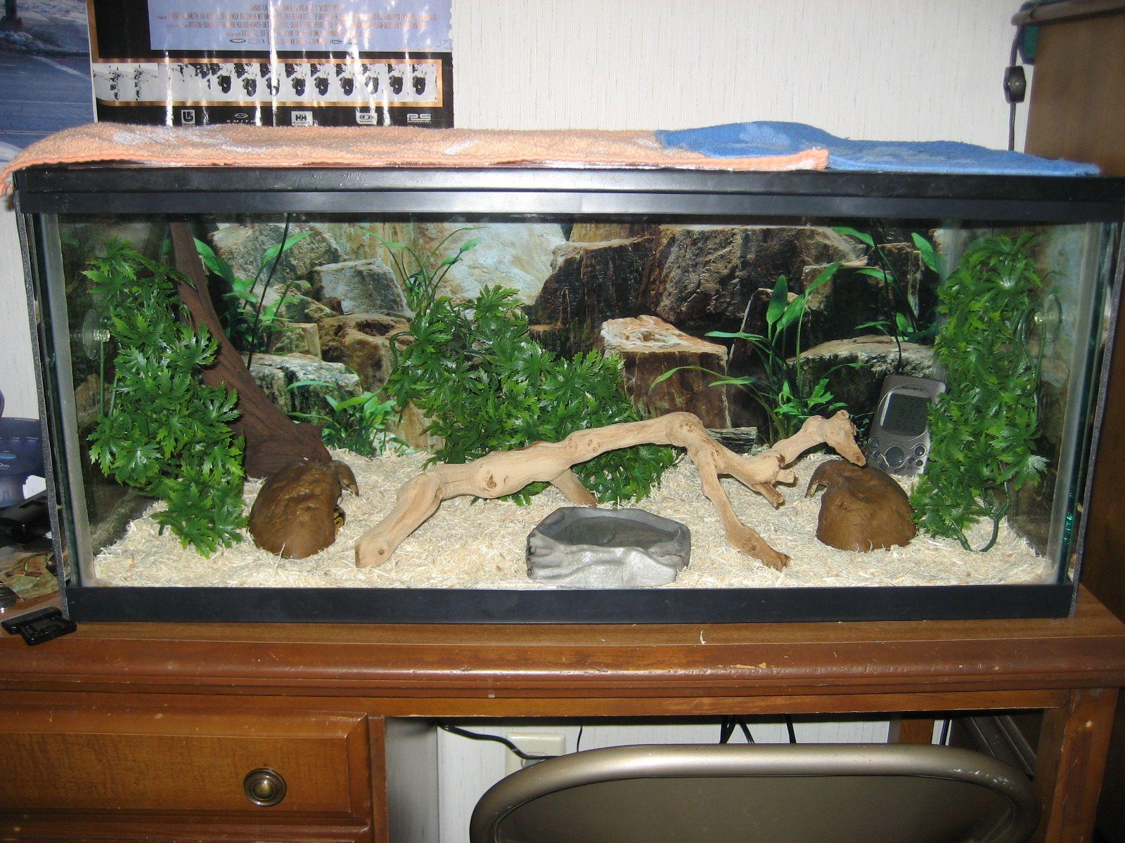 Habitat Inspiration For The Ball Python