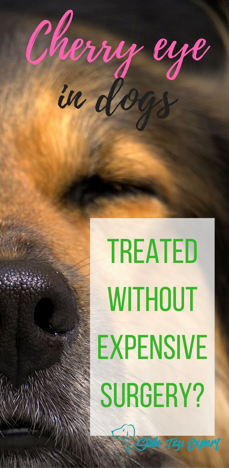 Cherry eye in dogs can this be treated without expensive