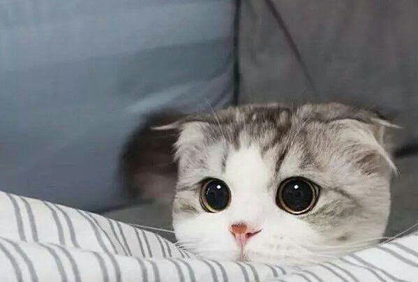 귀여운 고양이 사진 모음 * miki | Cute animals, Cute cat memes, Cute cats