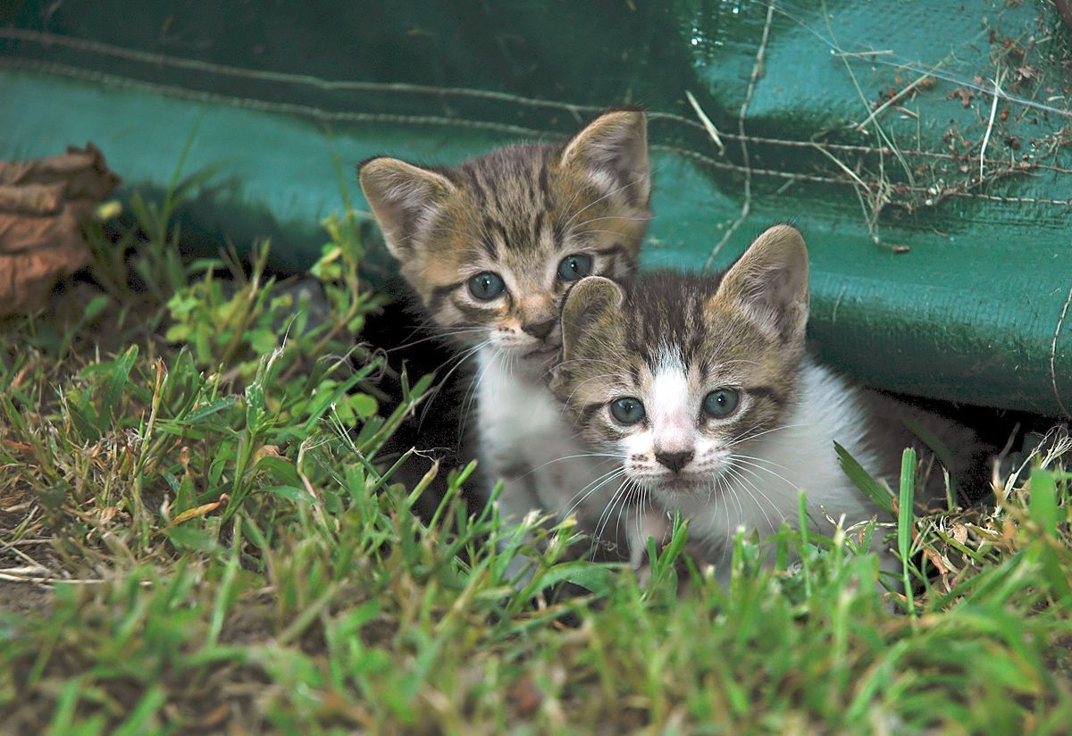 Two Cute Kitties... Cats, Feral cats, Kittens cutest