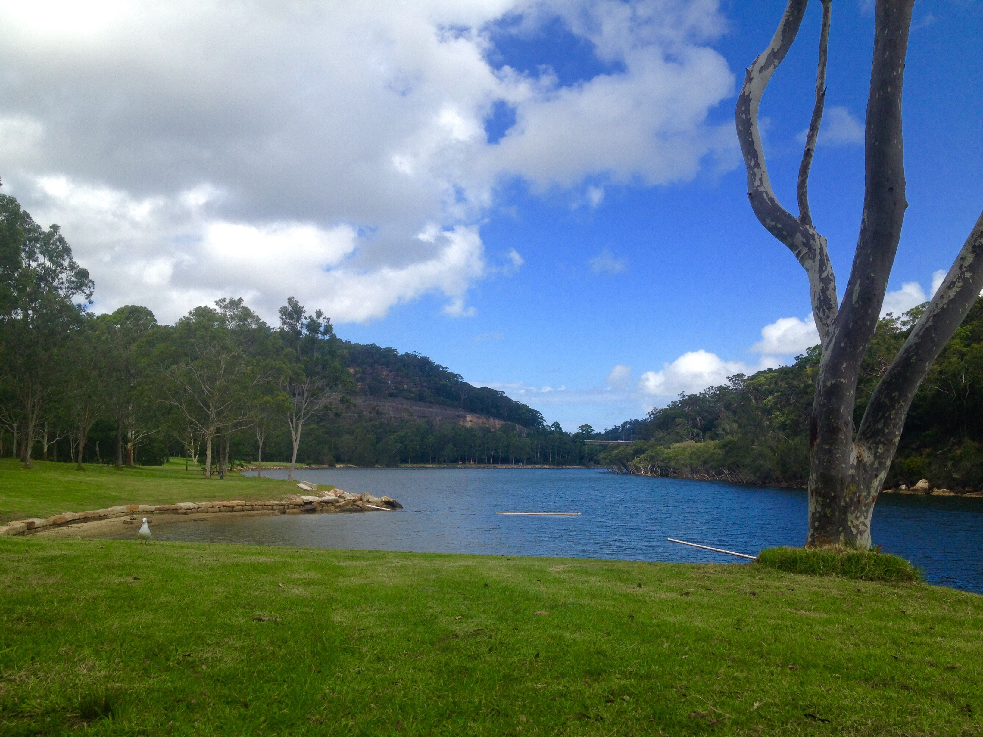 Davidson Park Picnic Area Roseville NSW