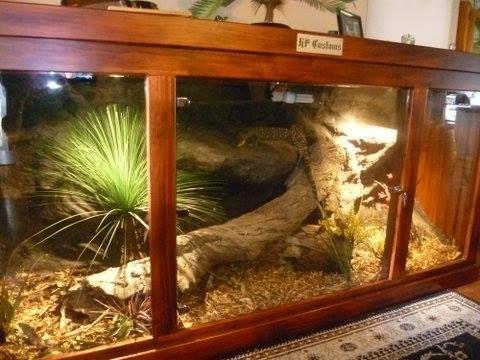 tegu enclosure reptile enclosures pinterest reptiles reptile