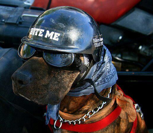 Hilarious! I love it!   Motorcycling-A Girl's Ride   Dogs ...