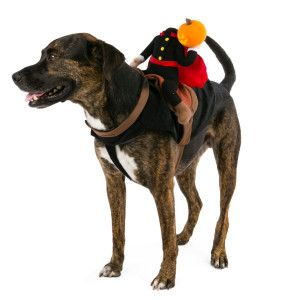 Top Paw™ Pet Halloween Headless Horseman Rider Costume  sc 1 st  Pinterest & Top Paw™ Pet Halloween Headless Horseman Rider Costume | Halloween ...