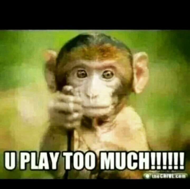 U Play Too Much Binatang Lucu Lucu Humor Hewan Lucu