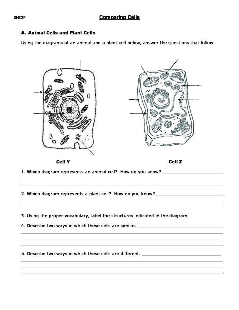 Plant Cell Worksheet Answers Paring Cells Worksheet Cells Worksheet Plant Cells Worksheet Animal Cells Worksheet