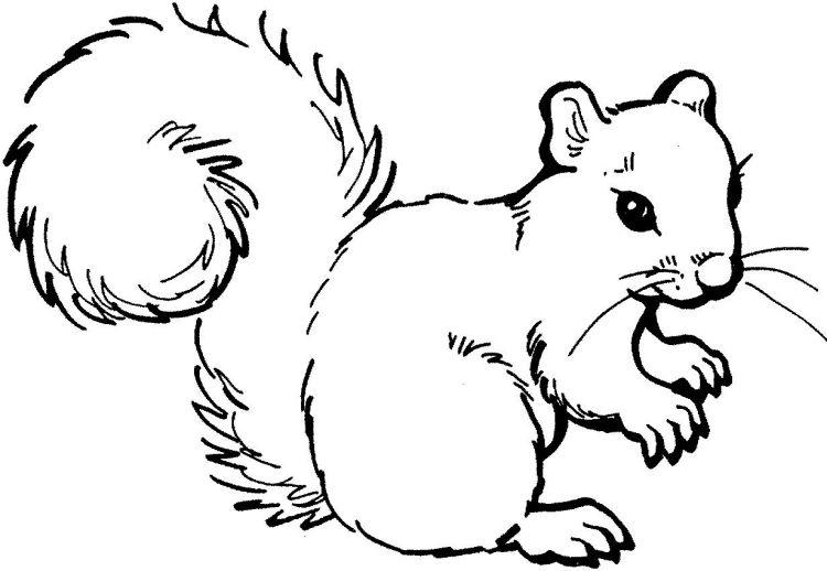 Vorlage zum Ausdrucken und Ausmalen - sehr detaillierte Eichhörnchen ...