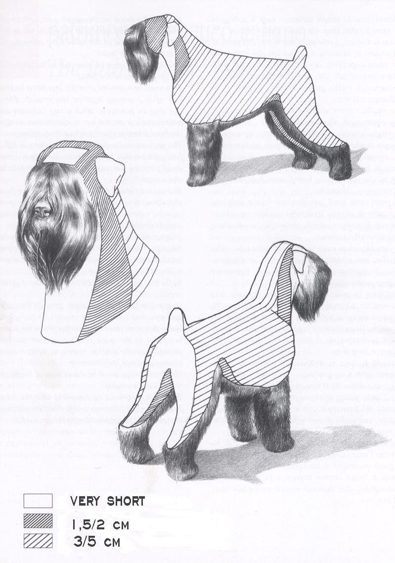 Black Russian Terrier Dog Groomers Schnauzer Grooming Black