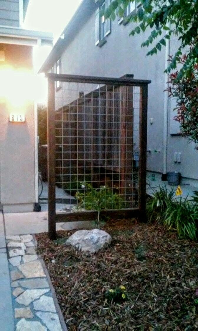 North Front Yard Trellis For The Clytostoma Callistegiodes Violet Trumpet Vine. | March - May ...