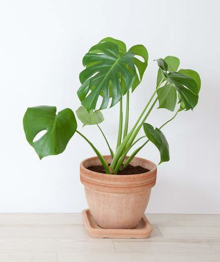 14 Hardy Houseplants That Will Survive The Winter 400 x 300