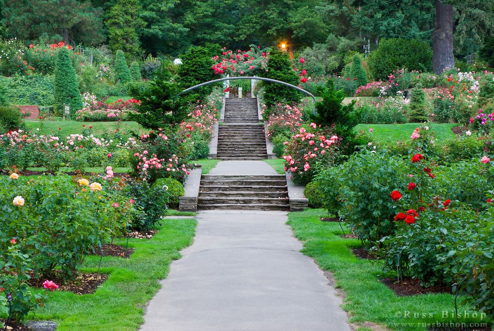 The International Rose Test Garden, Washinigton Park, Portland ...