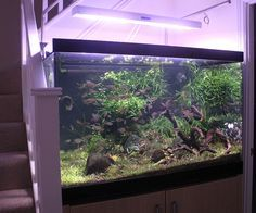 Planted tank / aquascaping