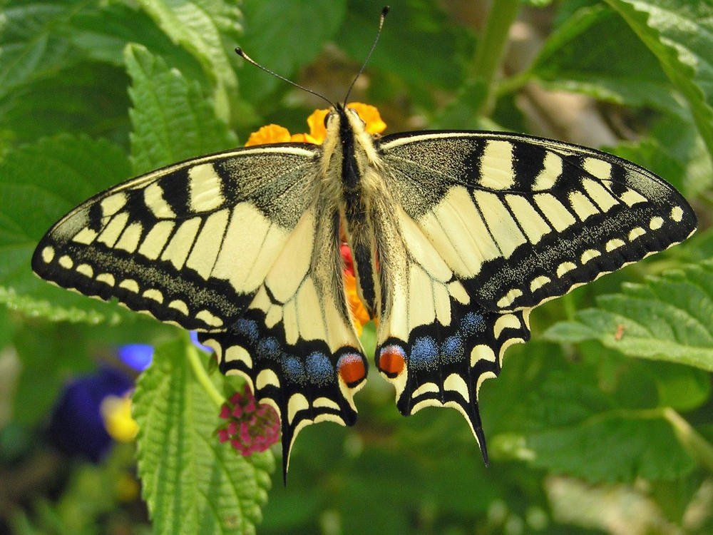 03 24 15 Proteja A Natureza More On Good Ideas And Diy Schone Schmetterlinge Schmetterling Schmetterling Bilder