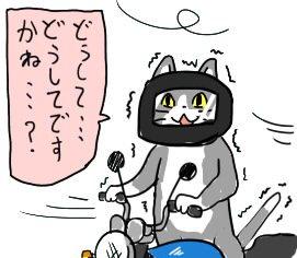 猫 どうして 現場