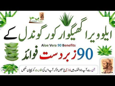 Aloe Vera Benefits Aloe Vera Benefits In Urdu Hindi Aloe Vera