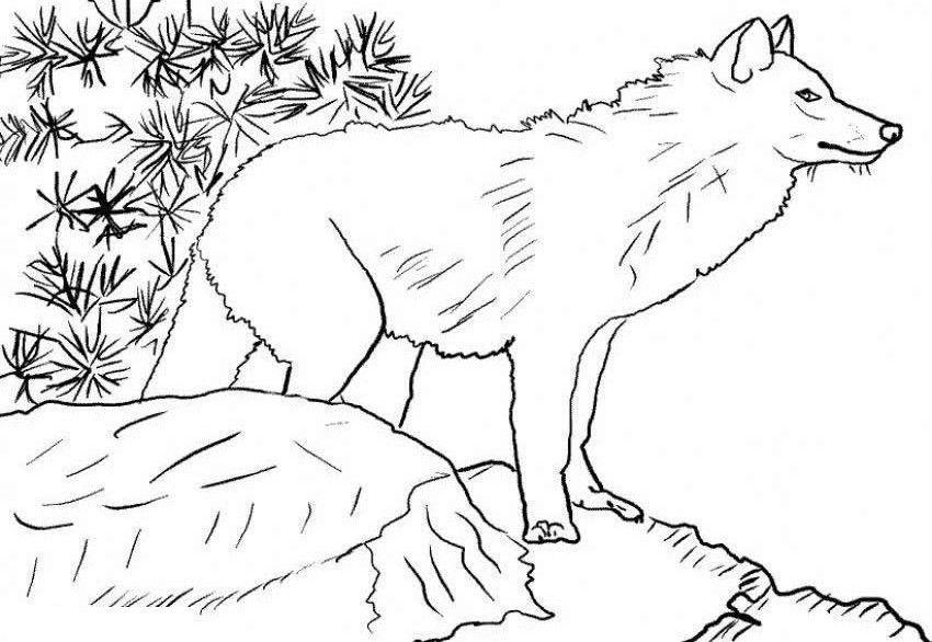 Wolf Versteckt Sich Kostenlose Ausmalbilder Malvorlagen Pferde Tiervorlagen Ausmalbilder