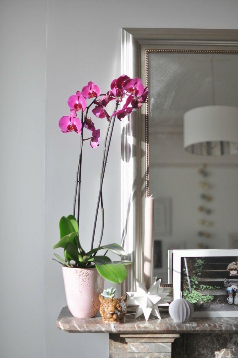 Comment Prendre Soin D Une Orchidee A La Maison Bon A Savoir En